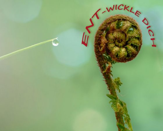 ENT-WICKLE DICH